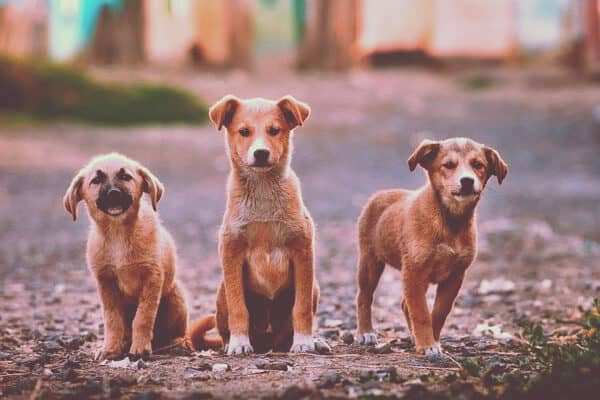 perros de famosos